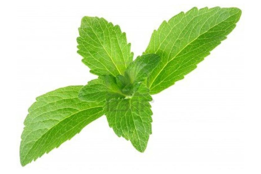 stevia-image