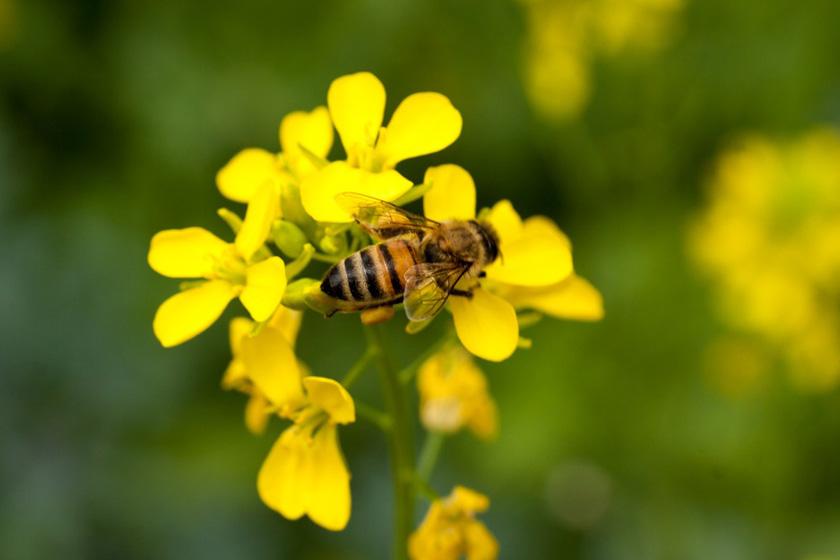 mustard-honey[1].jpg